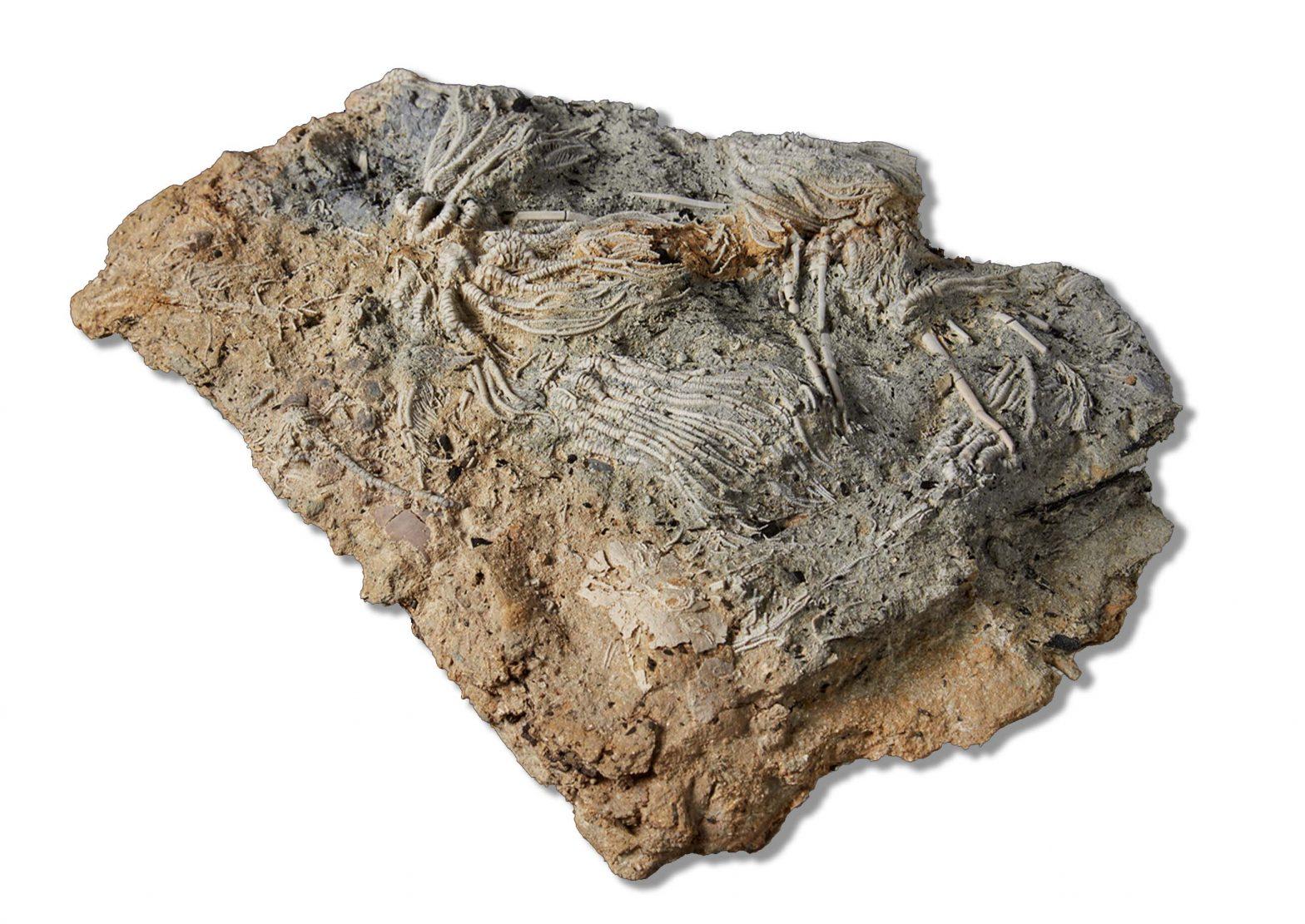 Fossili del Giurassico