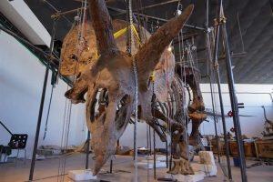 Il super triceratopo venduto all'asta